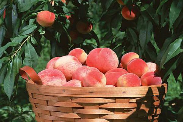 乌鲁木齐农家乐水果基地