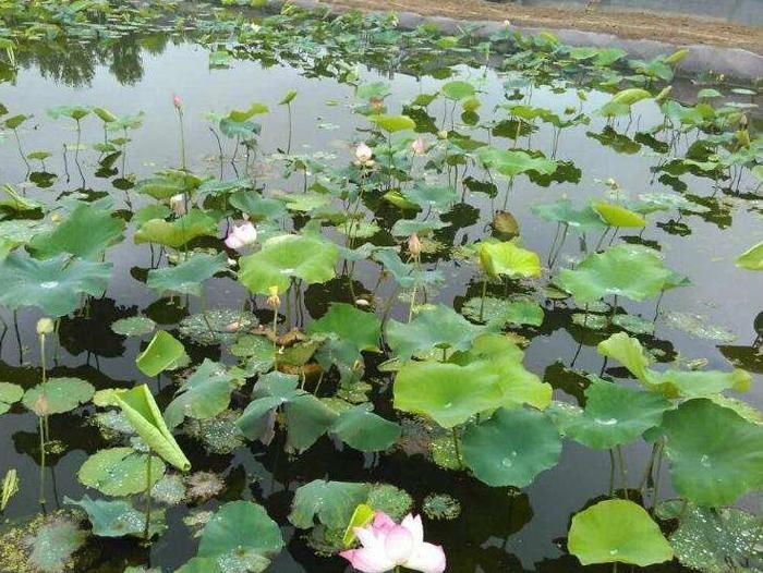 藕池养殖防渗膜
