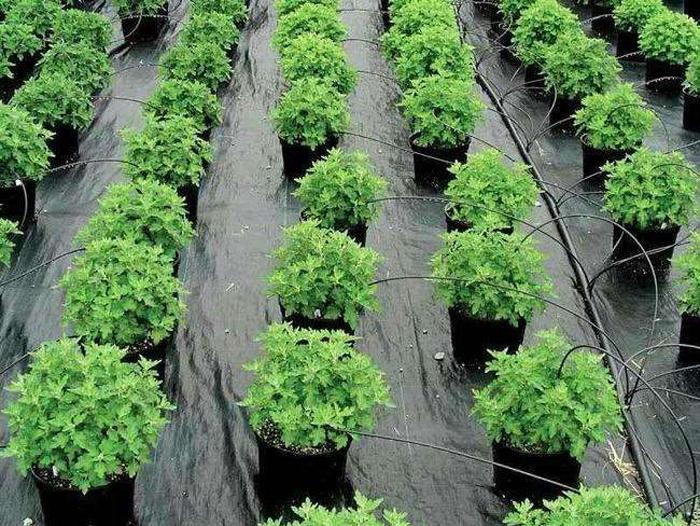 生态防草布