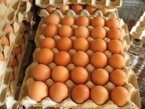 蛋类冷链物流