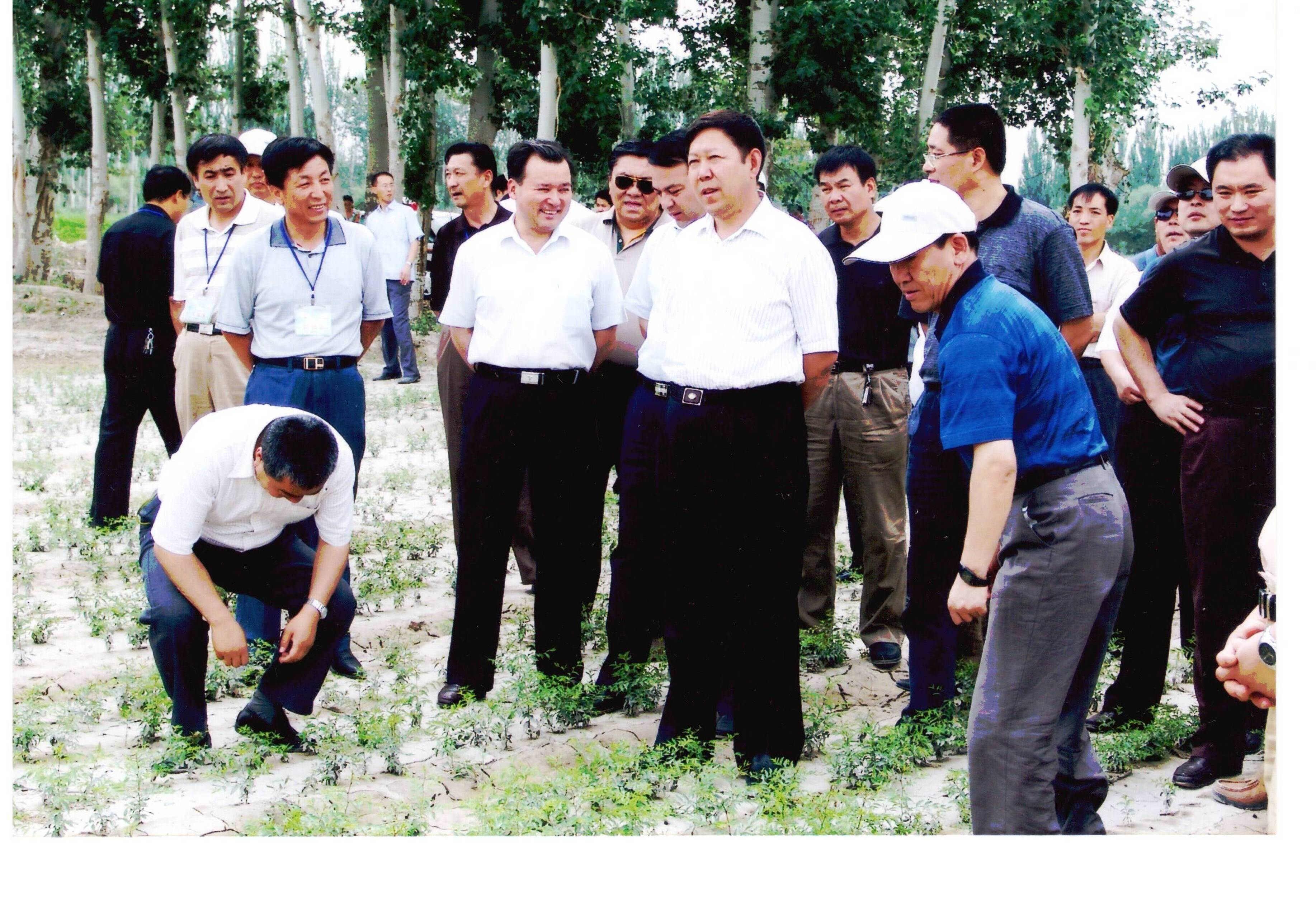 自治区副主席亲临北方园艺场苗木基地检查指导工作