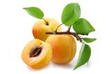大黄杏—杏子苗