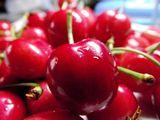 拉滨斯—樱桃苗