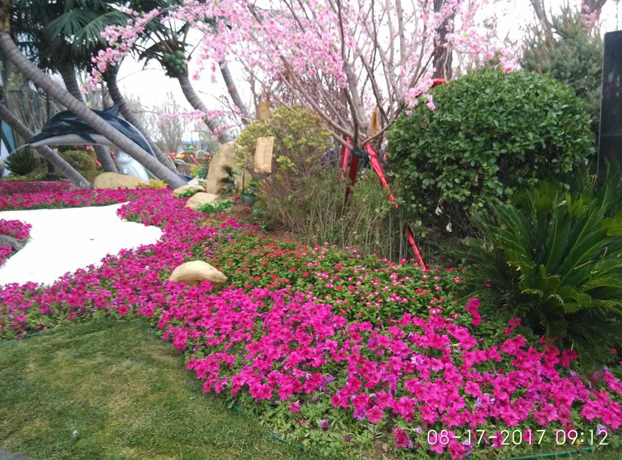 小区花卉种植