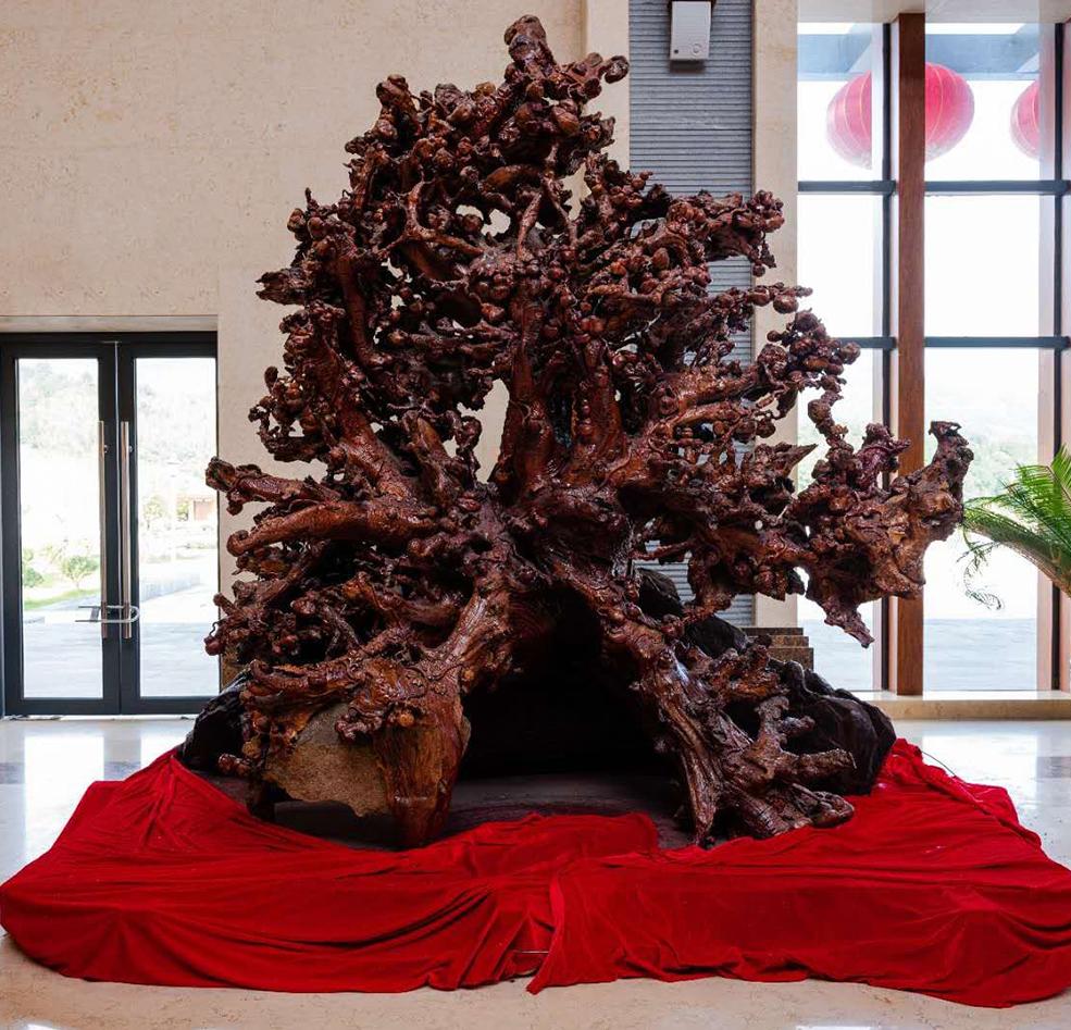 常見的根雕都是用什么木材