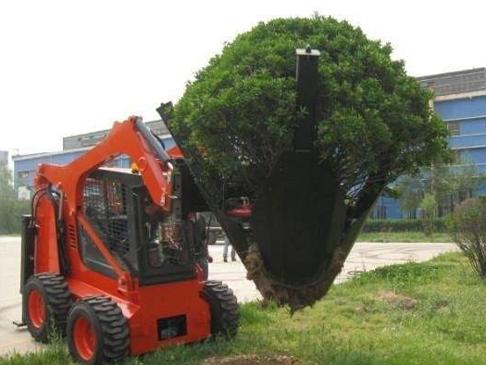 移树木案例