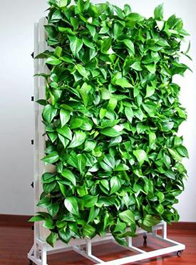 植物墙设计施工