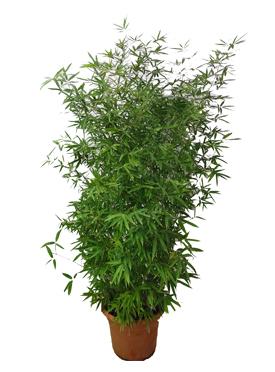 秧苗及宿根花卉