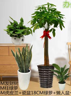 礼品盆栽花卉绿植
