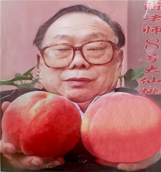 陈老师八号仙桃