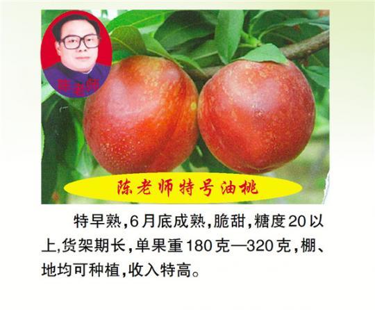 陈老师特号油桃