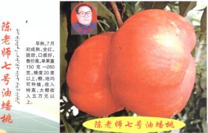 陈老师七号油桃