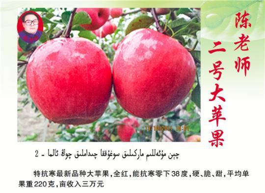 陈老师二号大苹果