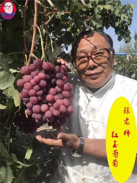 陈老师红玉葡萄