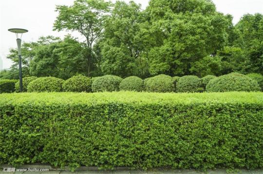 绿化灌木2