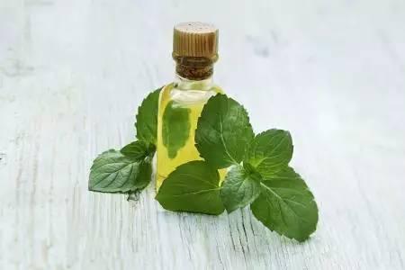 天然香精香料厂家浅谈小茴香油你不知道的秘密