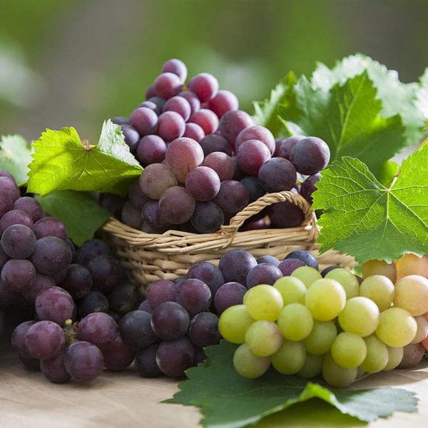 多吃葡萄多人体有哪些功效与作用?