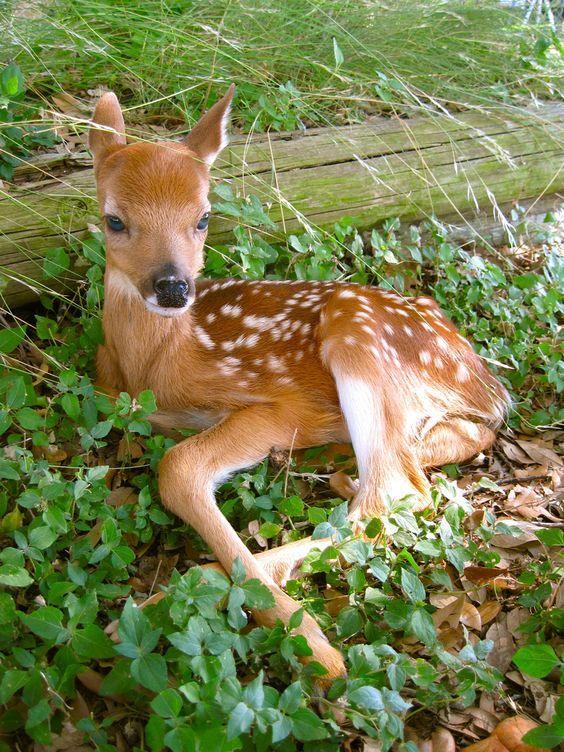 江西生态养殖场分享鹿茸对人体…