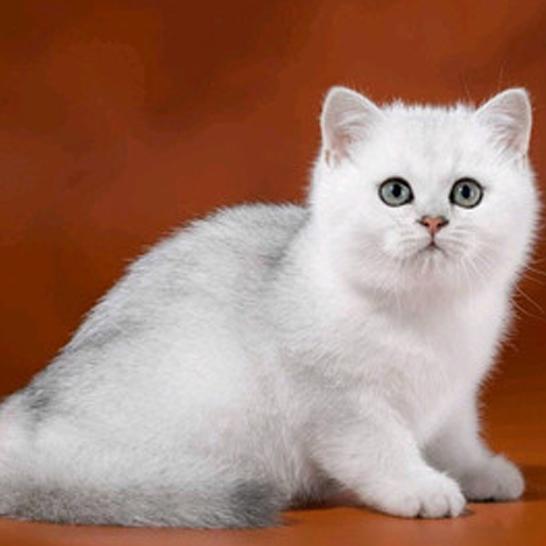 新手养猫注意事项