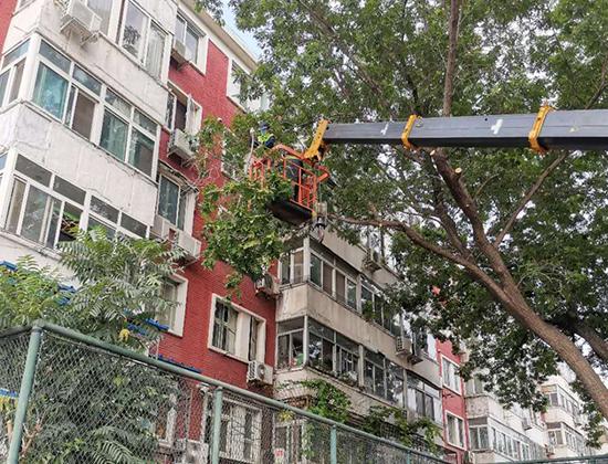 建设施工树木移植