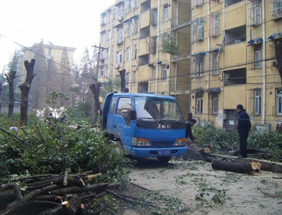 北京树木砍伐