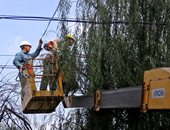 树木移植公司