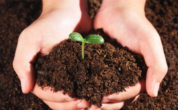 土壤质量的检测:样品的制备