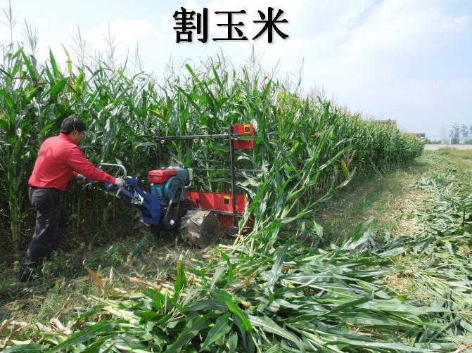玉米收割机操作图片