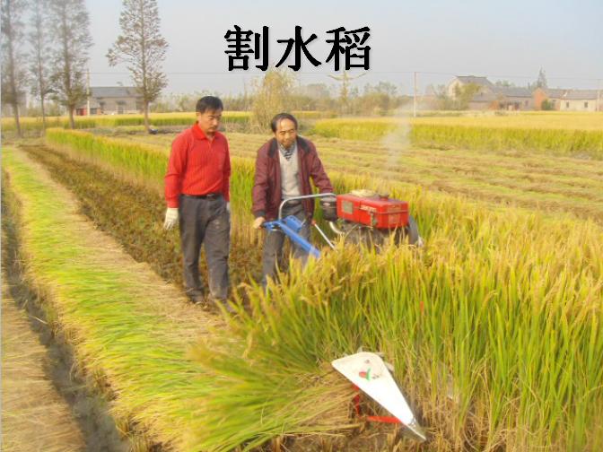 水稻割晒机