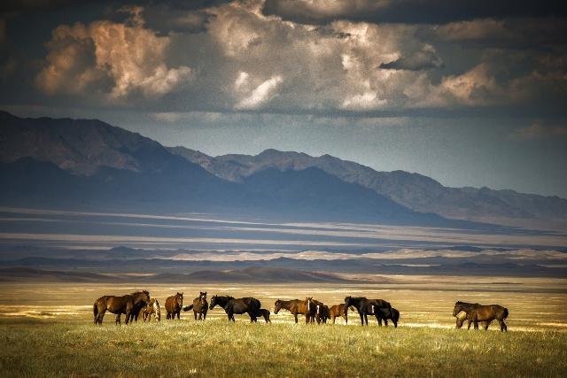 丝绸古道穿越之旅中亚中亚五国风光你可知