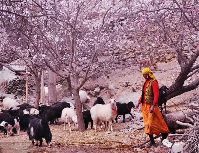 新疆摄影旅游团