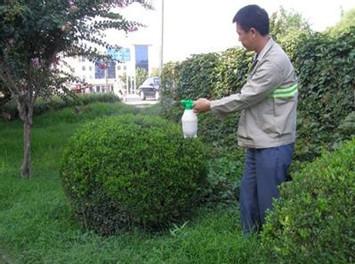 园林绿化养护托管