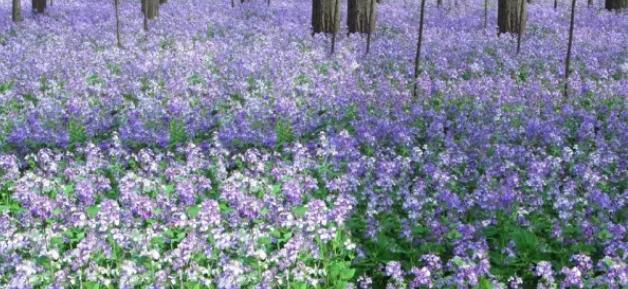 昆明景观花卉种子
