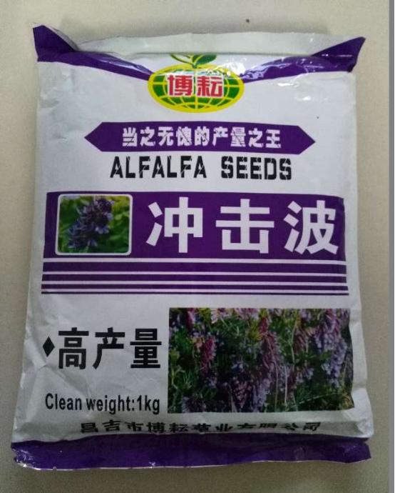 紫花苜蓿-冲击波