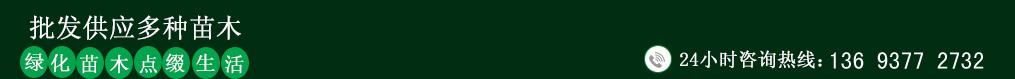 黄栌种植基地