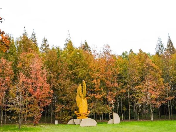 公园黄栌树