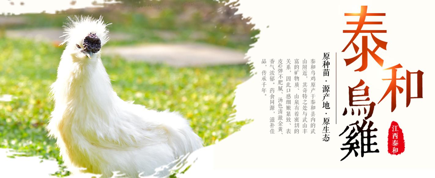 """热烈祝贺泰和被授予""""江西省泰和乌鸡食品产业基地""""称号"""