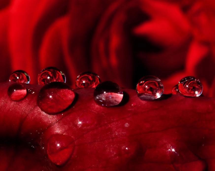 玫瑰精油价格