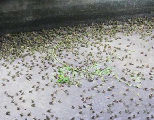 吉安青蛙养殖厂教您怎样防止幼蛙自相残杀,该如何管理饲养?