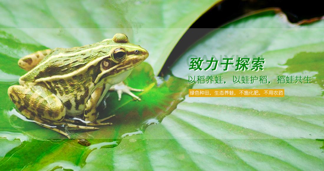 江西青蛙养殖基地带您了解黑斑蛙的生活习性与繁殖方式