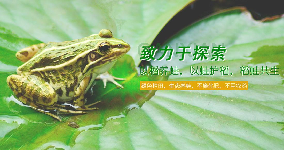 你知道人工养殖黑斑蛙幼苗对蛙池有什么具体要求吗?