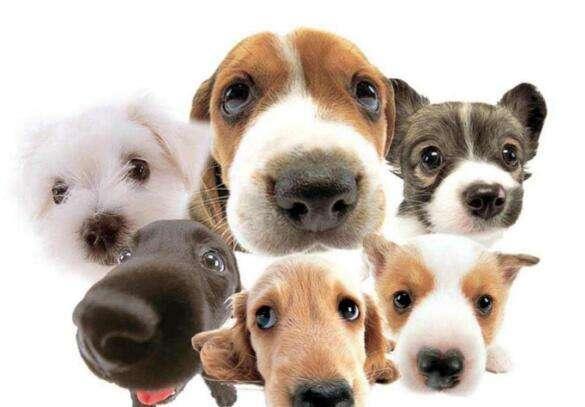 乌兰浩特宠物诊所哪家好|提示狗狗为什么总是哼哼唧唧