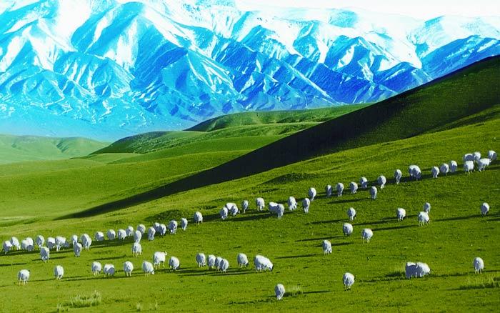 永昌——古丝绸之路的天然牧场