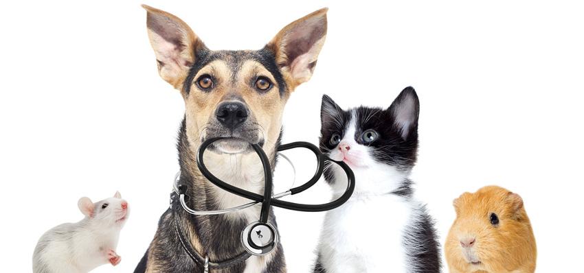乌鲁木齐动物治疗中心