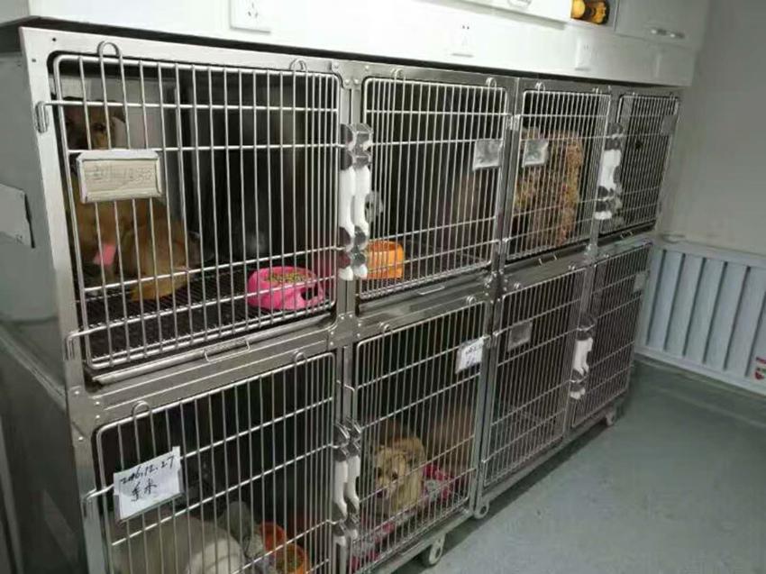 新疆动物疾病治疗机构