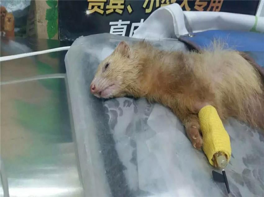 新疆动物诊疗医院