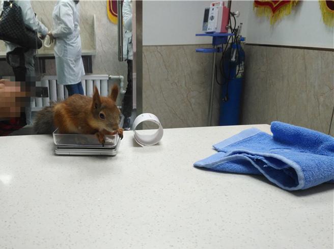 乌鲁木齐宠物医院