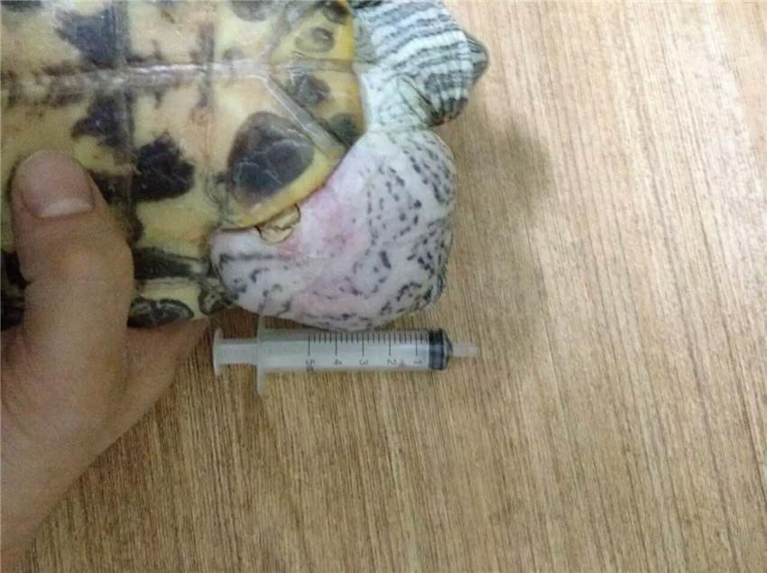 新疆动物诊疗机构