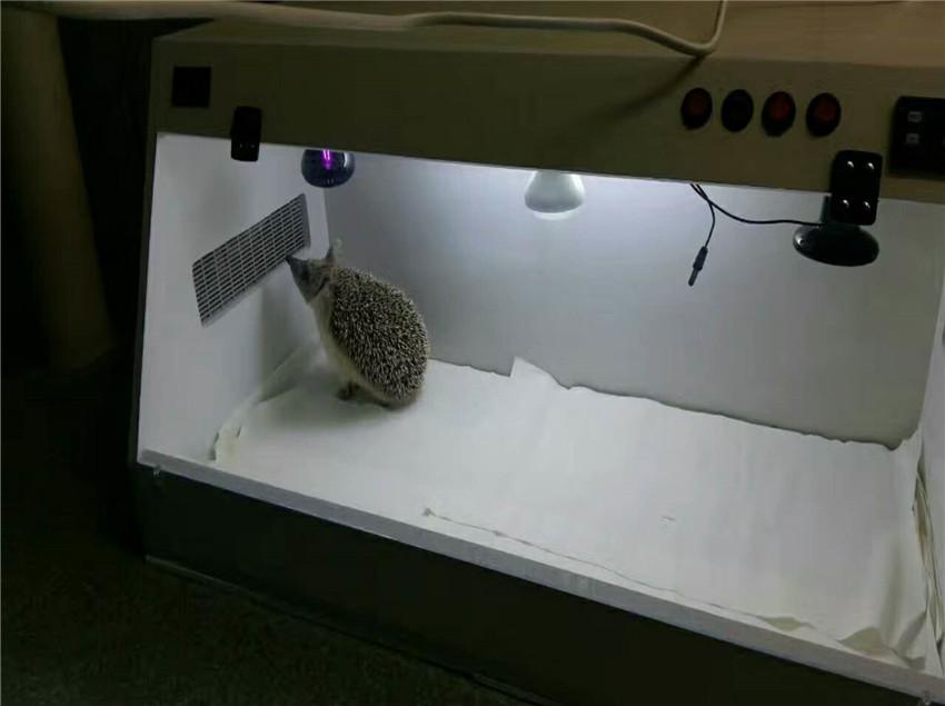 乌鲁木齐异种动物医院