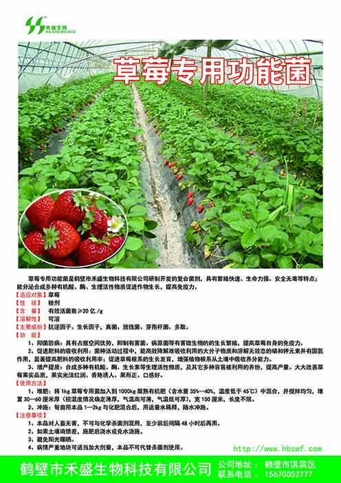 草莓专用功能菌